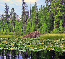 Beaver Lodge at Moose Lake by Brenton Cooper