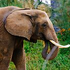 Elephant Side View by PatiDesigns