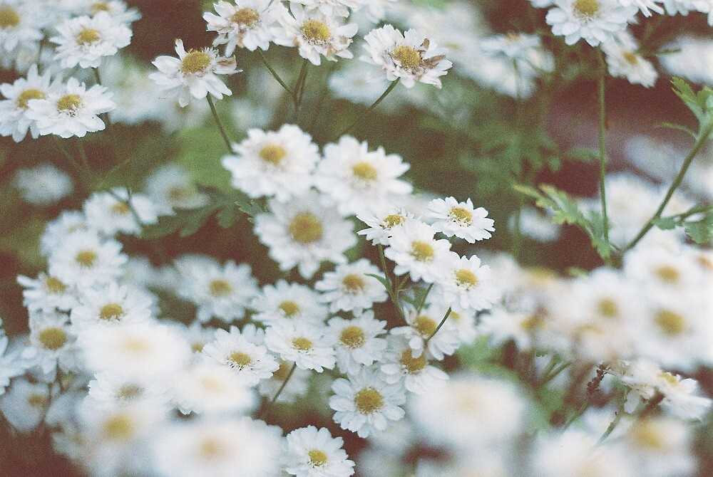 little flowers  by Tess Smith-Roberts