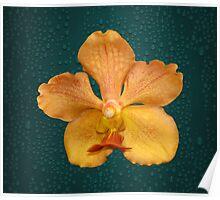 Beautiful Flowers Calendar 1 July Poster