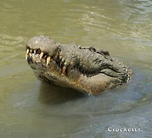 Saltwater Crocodiles Calendar 1 January by Gotcha29