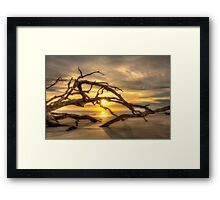 Sunrise through the Tree Framed Print