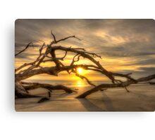 Sunrise through the Tree Canvas Print
