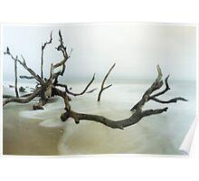 Fallen Tree on Beach Poster