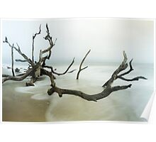Fallen Tree on Beach Poster