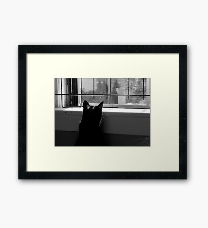 Nosy Neighbor Framed Print