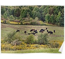 Cattle in the field Poster