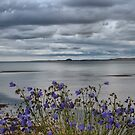 Bamburgh from Holy Island by Chris Vincent