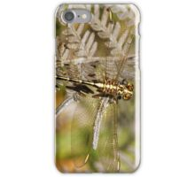 Yellow-striped Hunter Dragonfly iPhone Case/Skin