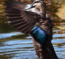 Lucky duck: Maribyrnong by Sally Kate Yeoman