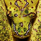 Yellow Green Tree Python by serpentscales