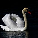 A Mystic Swan by jozi1