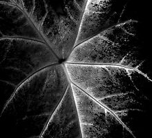 Leaf Patterns In Black And White by Noel Elliot