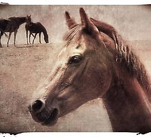 The Brown Horse by Eve Parry