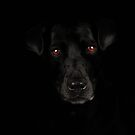 The Black Lab by Lover1969