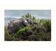 Elephant on the rampage Art Print