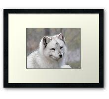 """""""Elf"""" The Arctic Fox Framed Print"""