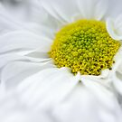 Delicate Flower by Susan Tong