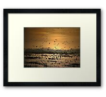 Life in the Wee Hours Framed Print