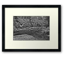 Cascade Creek IV Framed Print