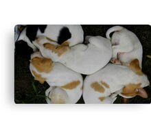 Pups At A Yard Sale Canvas Print