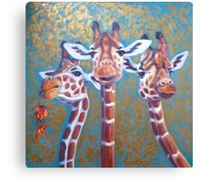 Three Gorgeous Giraffes Canvas Print