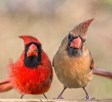 Who's the boss? by Bonnie T.  Barry