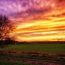 Rural Sunset Burst  by Vicki Field