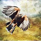 Hawk in Flight by Barbara Manis