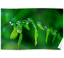 Dew Drops on Maidenhair Poster