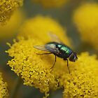 Blowflies in Macro by Larry Lingard/Davis