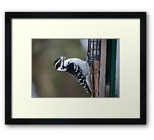 Leaning back woody Framed Print