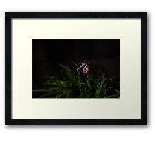 Pitcher Orchid Framed Print