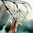 Ice storm 1 by Wojtek  Jaskiewicz