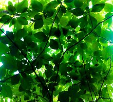 Sassafras Leaf Canopy by Nalinne Jones