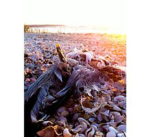 Seagull Cemetery  Photographic Print