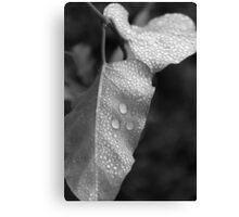 Leaf bw Canvas Print