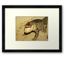 Gator Bait Framed Print
