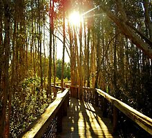 Swamp Trail by WetProductions