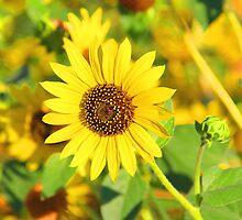 """Sunflower"" by Carter L. Shepard by echoesofheaven"