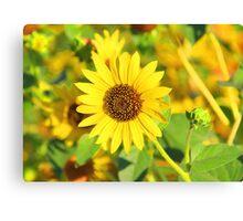 """Sunflower"" by Carter L. Shepard Canvas Print"