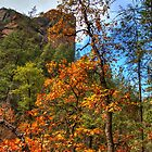 Fall In Sedona Arizona by Diana Graves Photography
