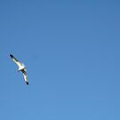 Birds and Flowers by Rebecca Hessey