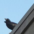 Feathers Blowing in the Wind by Rebecca Hessey
