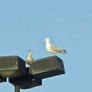 What next? by Rebecca Hessey
