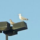 Grey White Grey by Rebecca Hessey