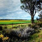A Drive In The Australian Countryside.  by Eve Parry