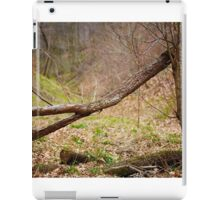 Fallen trees in a forest on springtime iPad Case/Skin
