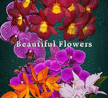 Beautiful Flowers Calendar 2 Orchid Orchide by Gotcha29