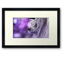 Dog Portrait - Dharma Framed Print